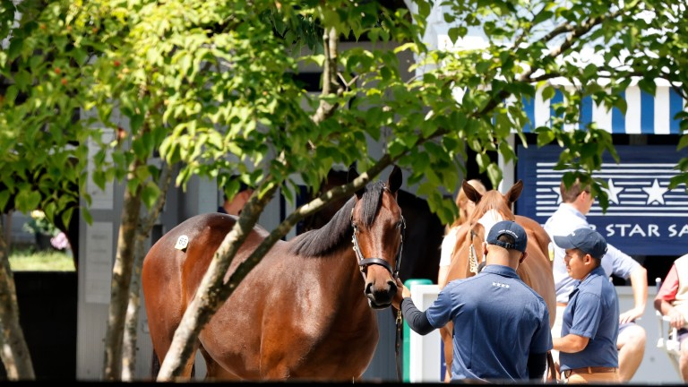 Yearling inspections under way at Keeneland