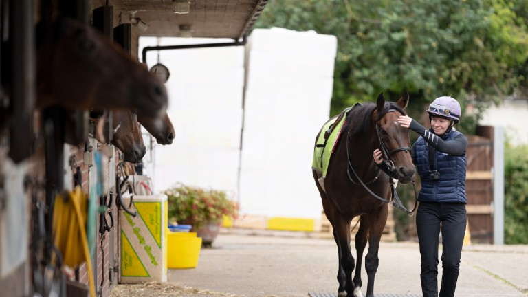 All eyes on a celebrity: Caribbean Spring (Bean) and Rosie walk up to his box past some interested spectators