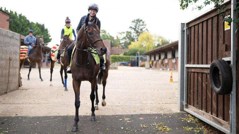 Caribbean Spring (Bean) heads out for his morning exercise from Graham Lodge Stables