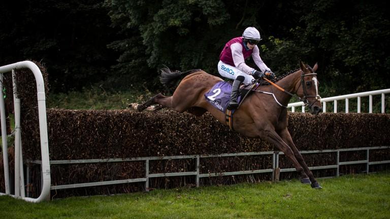 Kitty Galore: one of three winners for Sean O'Keeffe at Sligo on Wednesday