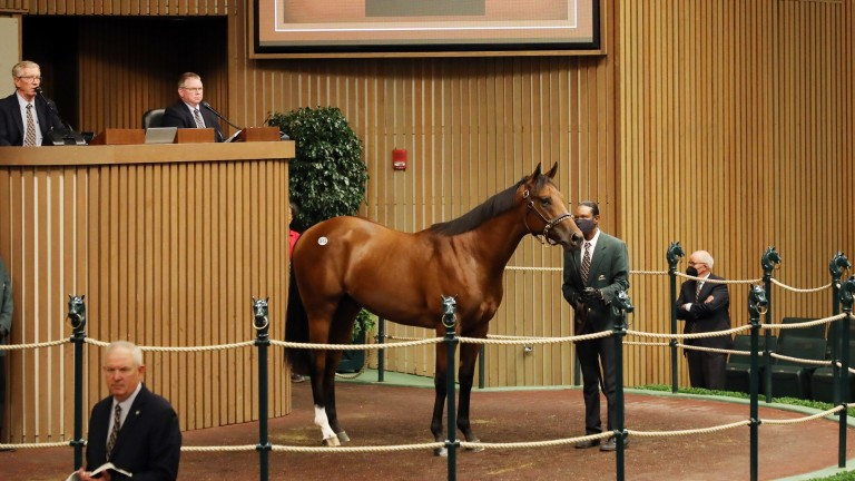 Rosilyn Polan's City Of Light colt tops Book 2 of the Keeneland September Yearling Sale at $1.7 million