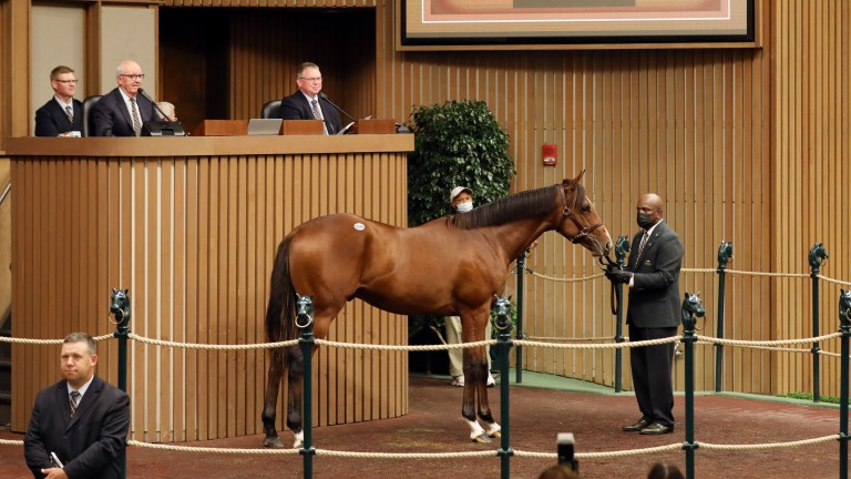 Stonehaven Steadings' Justify colt sells to Michael Talla and West Point Thoroughbreds for $1.55 million