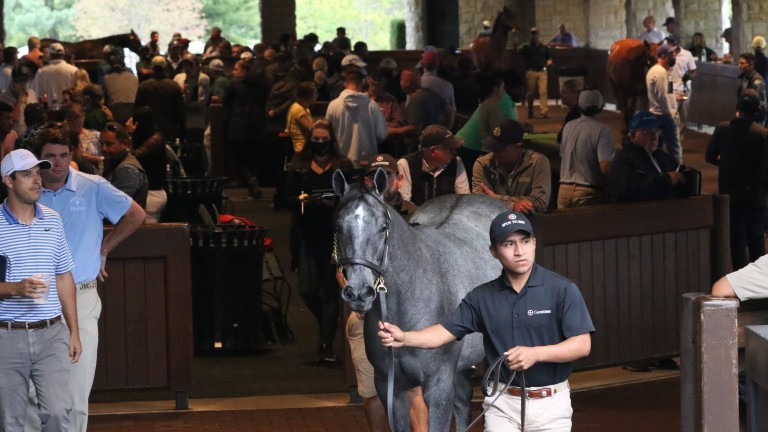 A yearling enters the Keeneland sale ring at the September Yearling Sale