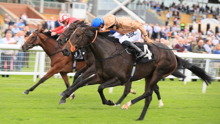 Heredia (near) produces a strong late run to land the 7f fillies' conditions stakes