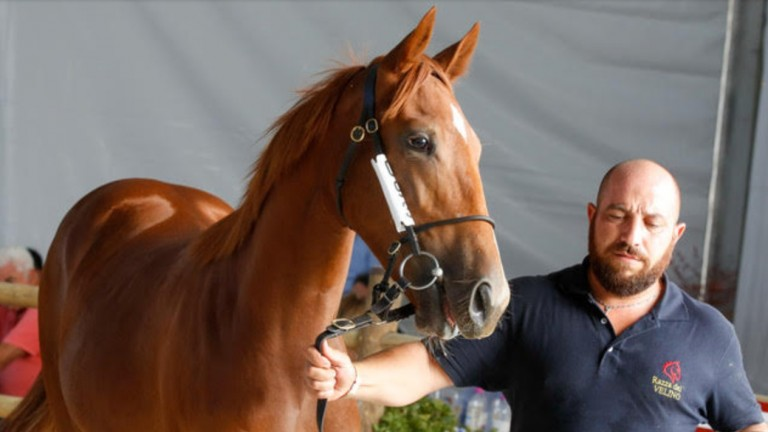 The Sea The Stars colt caught the attention in the ring in Milan