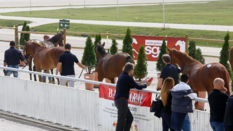 Spectators survey equine talent in Italy on Saturday