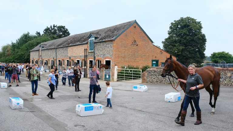Lady Bowthorpe is paraded in front of the crowds at Phantom House Stables