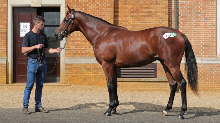 Lot 70: the £85,000 Make Believe colt strikes a pose