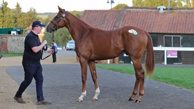 Lot 217: the session-topping No Nay Never colt who fetched £130,000