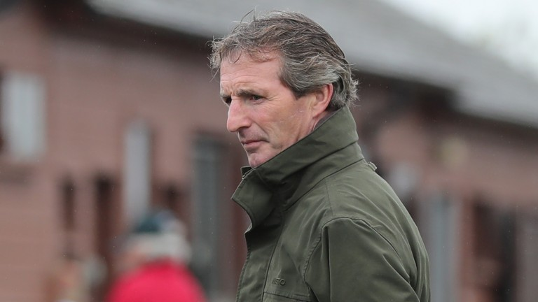 Norman Williamson casts his expert eye over one of the yearlings