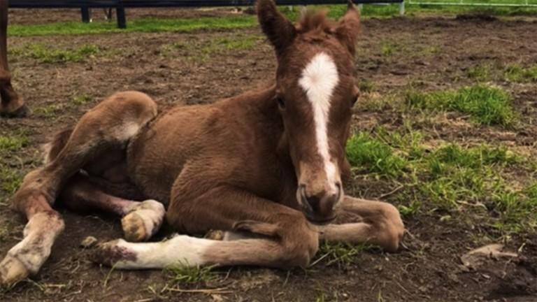 The colt foal born just after an earthquake struck in Victoria