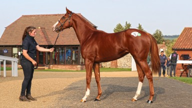 Lot 451: the Exceed And Excel half-sister to Zain Claudette after selling for £200,000