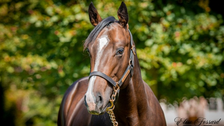 Connections feel that Lucky Vega's half-brother has plenty of star quality