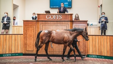 Goffs UK top lot: the Harry Angel colt bought by Alex Elliott for £220,000