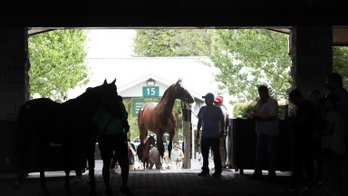 Yearlings are prepped ahead of going under the hammer at Keeneland