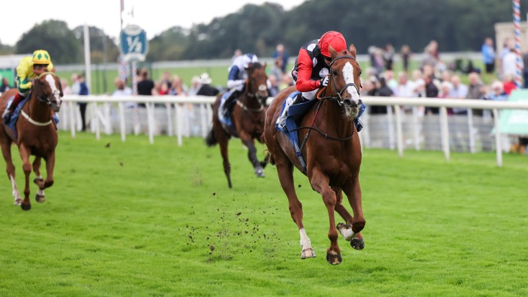 Master Milliner with ease at York on Friday to secure Turner's milestone win