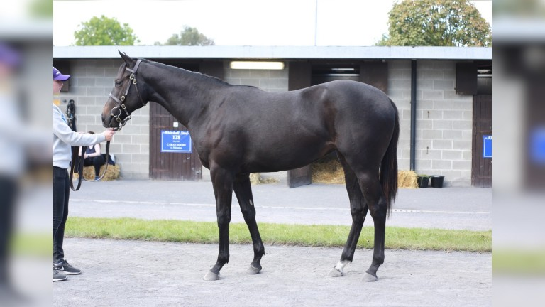 Lot 117: the Sioux Nation half-sister to Mother Earth on the Goffs sales ground