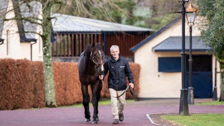 US Navy Flag: Coolmore's first-crop stallion is represented by a half-sister to Poetic Flare