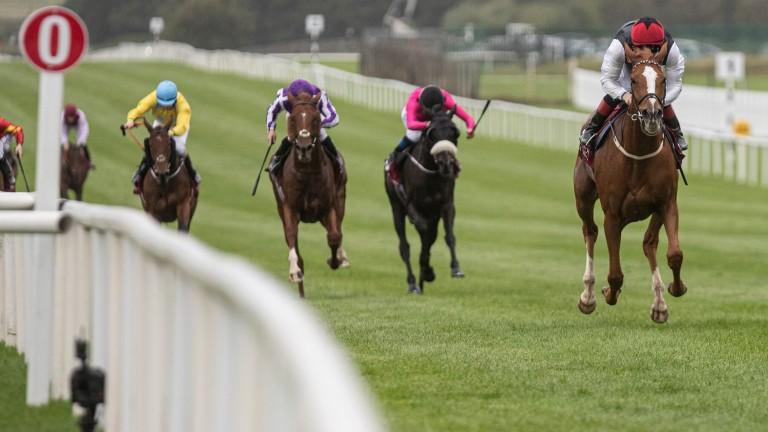 Search For A Song runs out an effortless winner of the Loughbrown Stakes