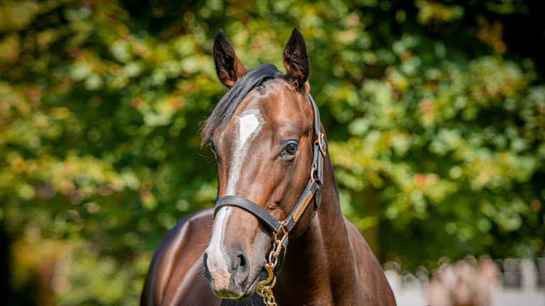 Lot 196: the Footstepsinthesand half-brother to Lucky Vega
