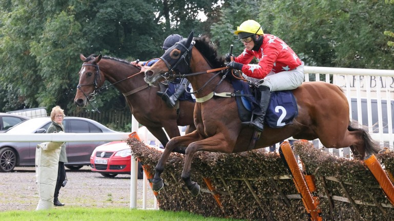 Knight Salute takes a flight of hurdles before going on to victory
