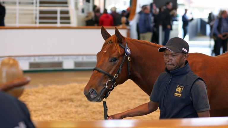 Lot 604: the Night Of Thunder colt out of Harlequin Girl sells for 375,000gns