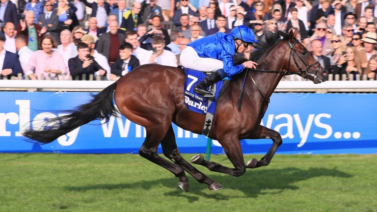 Native Trail: an impressive winner of the Dewhurst Stakes