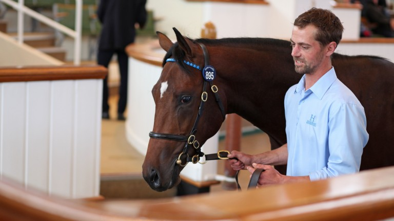 Top lot: the 525,000gns Kingman colt exits the Tattersalls ring