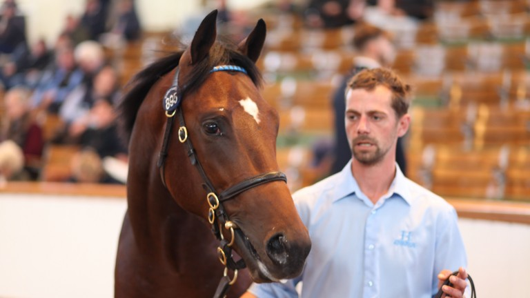 Lot 895: the Kingman colt out of Reem sells to Juddmonte for 525,000gns