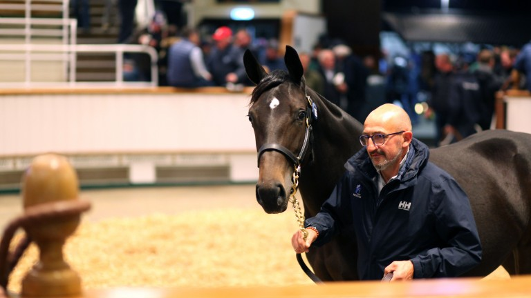 Lot 1,285: the 350,000gns Wootton Bassett filly takes to the Tattersalls ring