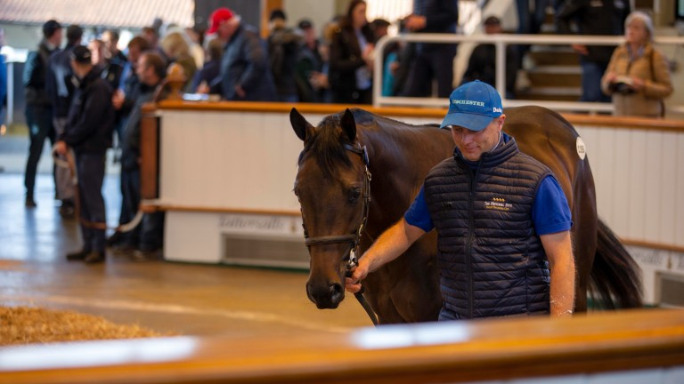 The Time Test colt out of Aurelia from Ballyvolane Stud in the ring before selling to Sackville Donald for a session-topping 400,000gns