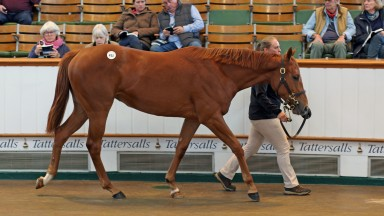Lot 411: the Sea The Stars filly out of Best Terms sells to Godolphin for 1,500,000gns