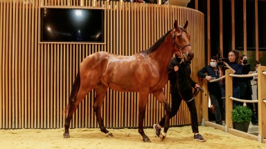 Lot 209, a son of Camelot, topped the charts at €440,000 on day one of the Arqana October Yearling sale